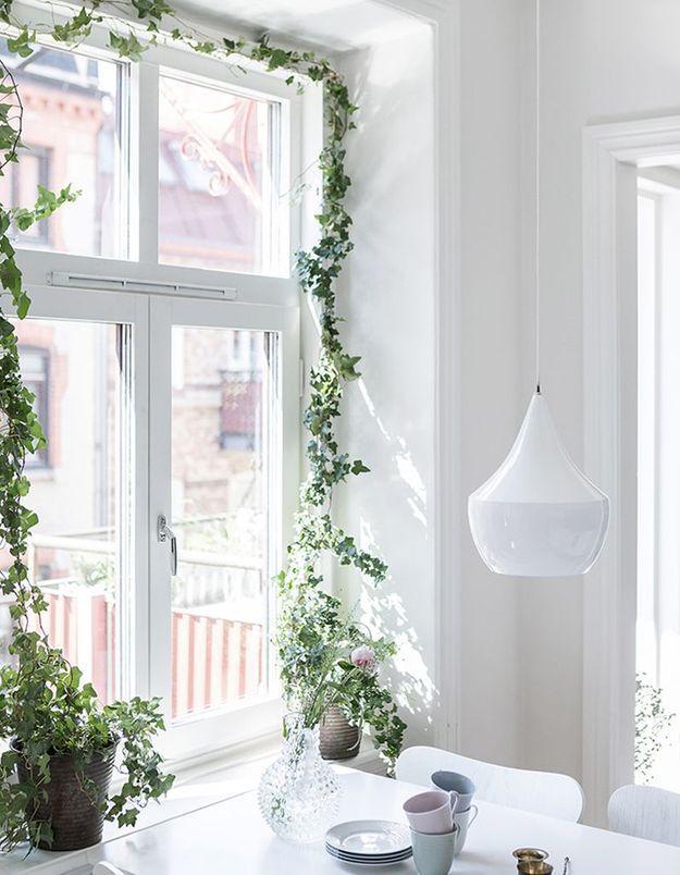 Végétaliser son intérieur sans perdre de place en optant pour des plantes grimpantes qui encadrent la fenêtre