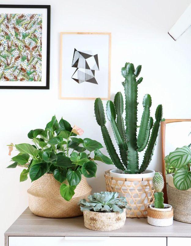 Végétaliser son intérieur sans perdre de place en posant des petites plantes sur un meuble bas