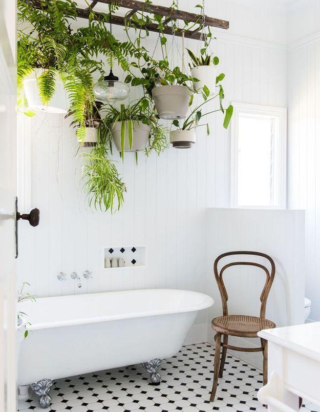 Végétaliser son intérieur sans perdre de place en suspendant une échelle et des plantes