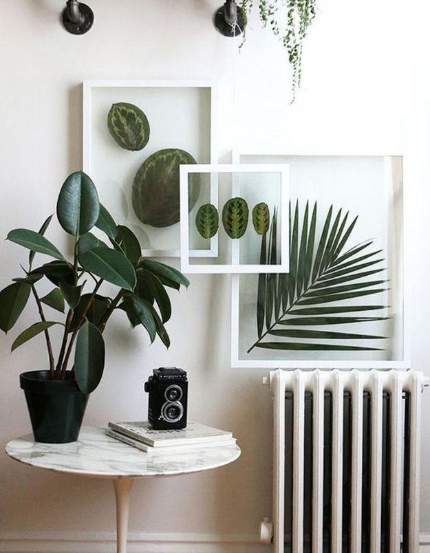 Végétaliser son intérieur sans perdre de place grâce à des cadres transparents façon herbier