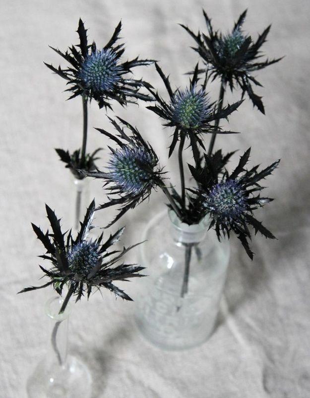 Décoration Halloween : les plantes épineuses comme le chardon