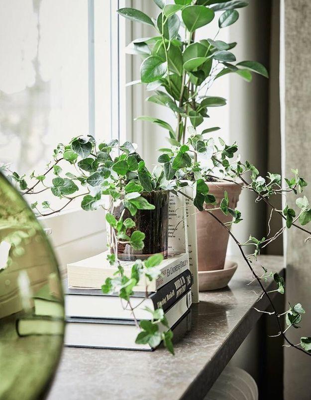 Décorez vos rebords de fenêtres avec des revues