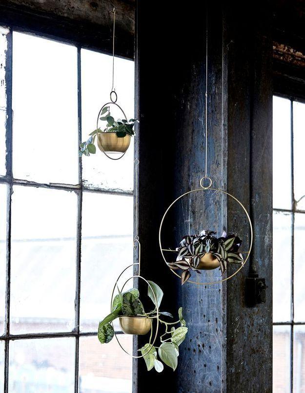 Un jardin d'hiver aérien via des plantes suspendues