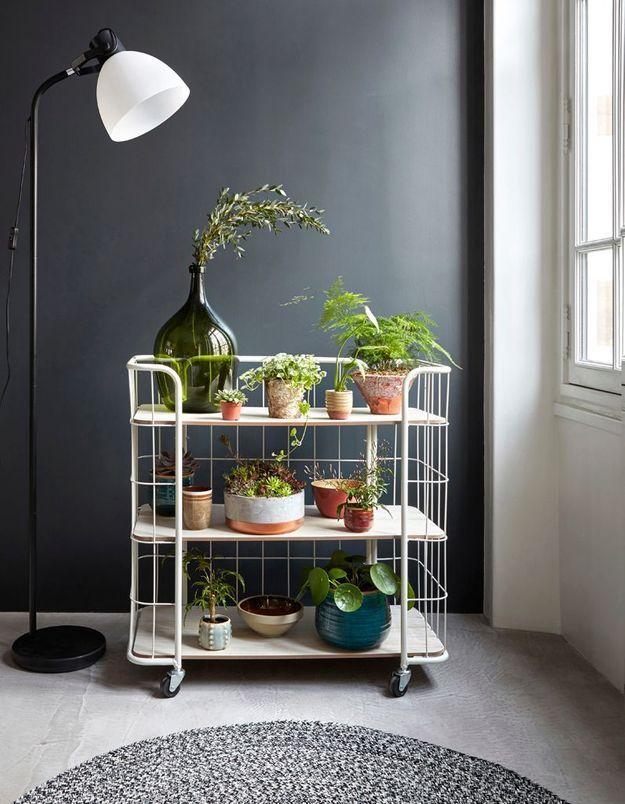 Un jardin d'hiver mobile via des plantes posées sur un petit meuble à roulettes