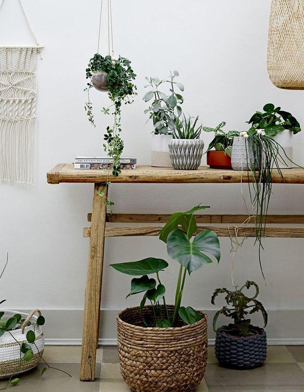 Un jardin d'hiver délicat en accumulant des petites plantes (suspendues, au sol ou dans des pots à fleurs)