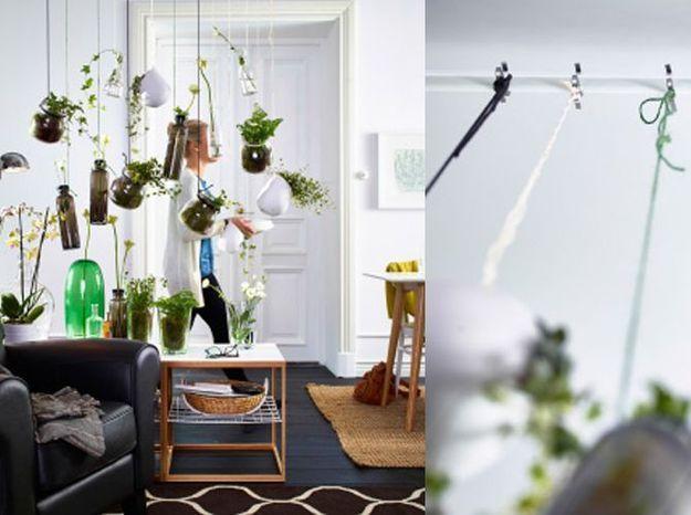 Dans un salon : les plantes suspendues