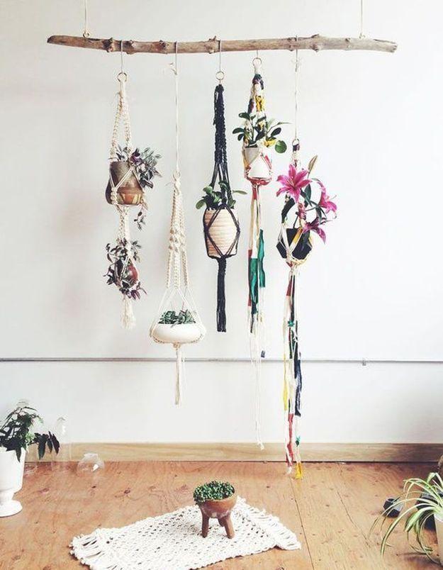 Créer un support à plantes suspendues avec une branche de bois flotté