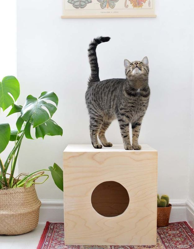 Un DIY pour réaliser une cabane à chien et chat