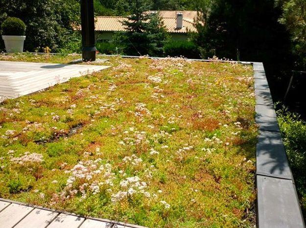 Je veux une toiture végétale