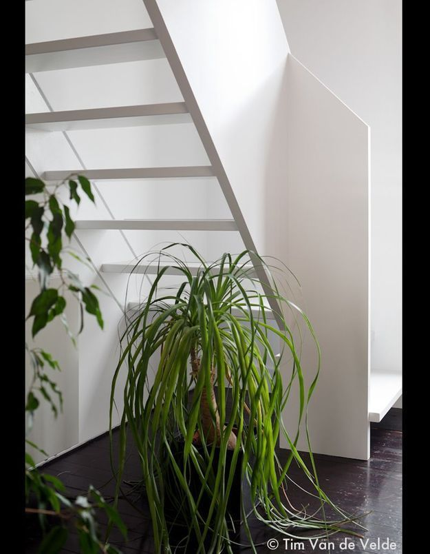 Un escalier vert- igineux