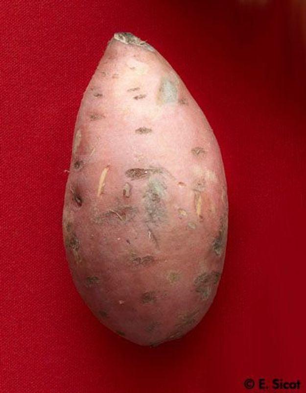 Colombo de porc aux patates douces