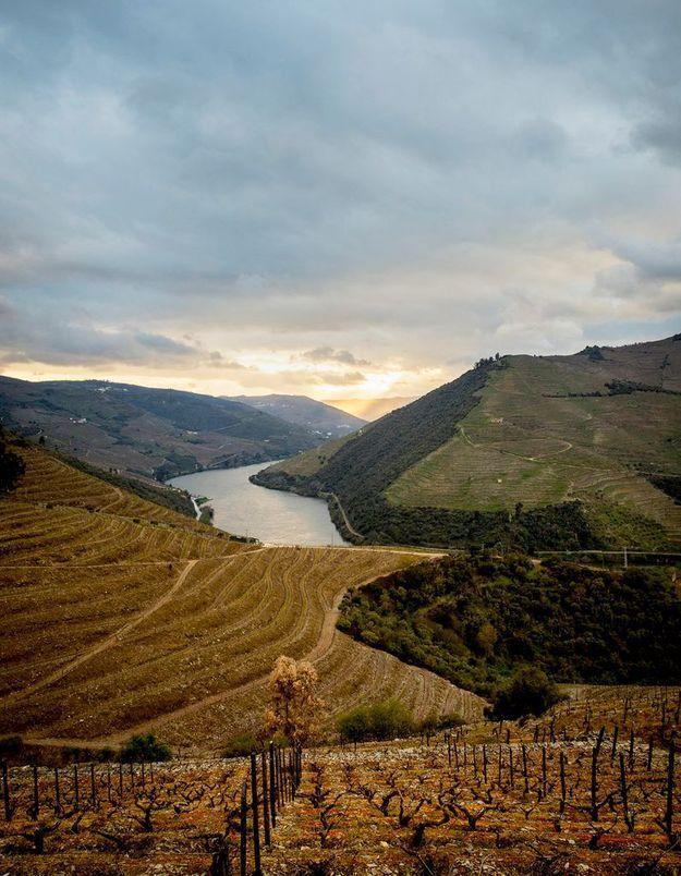 Des vignes au Portugal