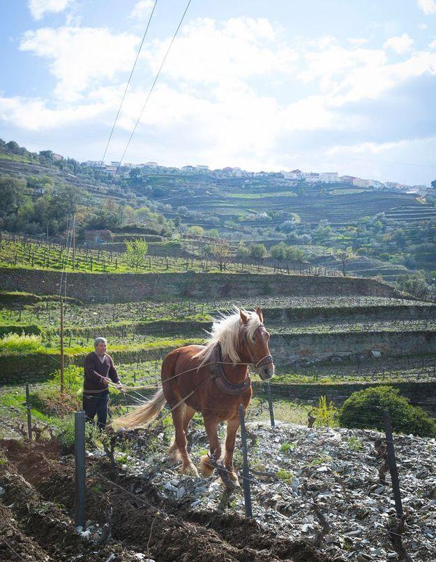 Le travail de la vigne