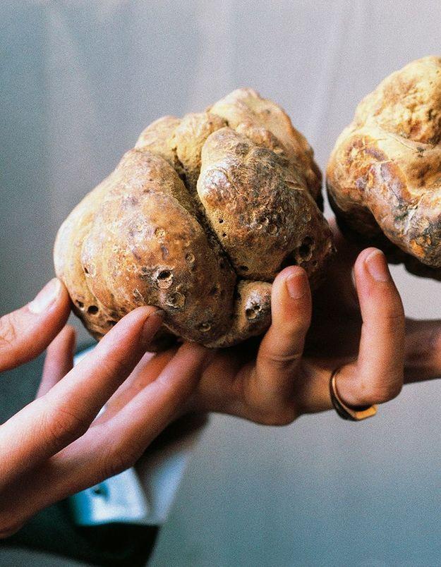 Connaissez-vous la truffe blanche ?