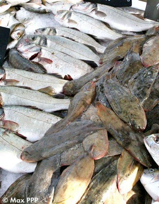 Marché : on mise tout sur les poissons de saison
