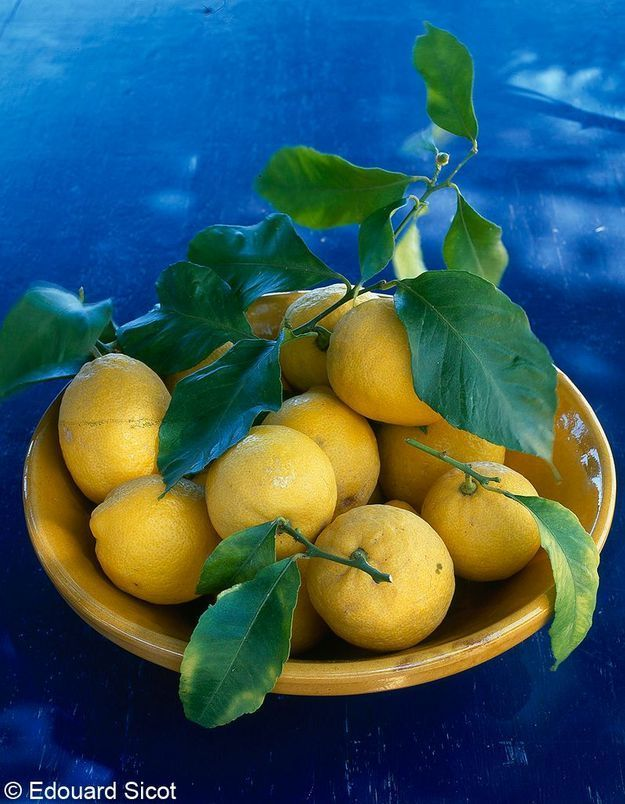 Dans le citron, tout est bon !