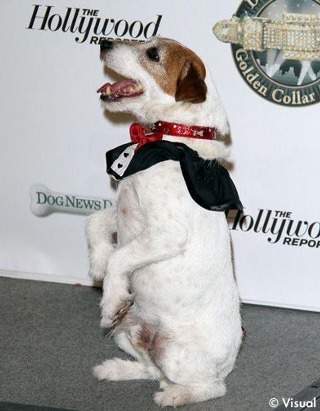 Le chien de « The Artist » reçoit aussi une récompense