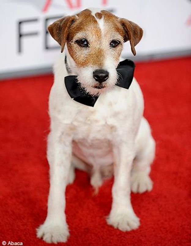 Le chien Uggie, la nouvelle star d'Hollywood ?