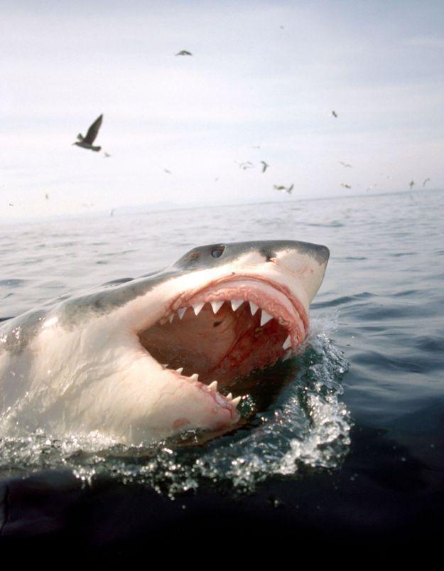 Le cinéma français s'offre son tout premier film de requins : les « Dents de la Mer » made in Arcachon