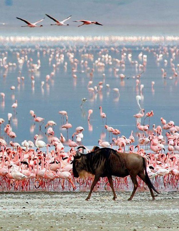 Zanzibar, en Tanzanie