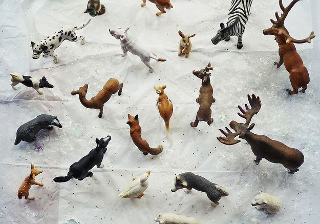 Rêves d'animaux