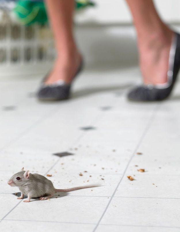 La musophobie, ou la terreur des rats et des souris