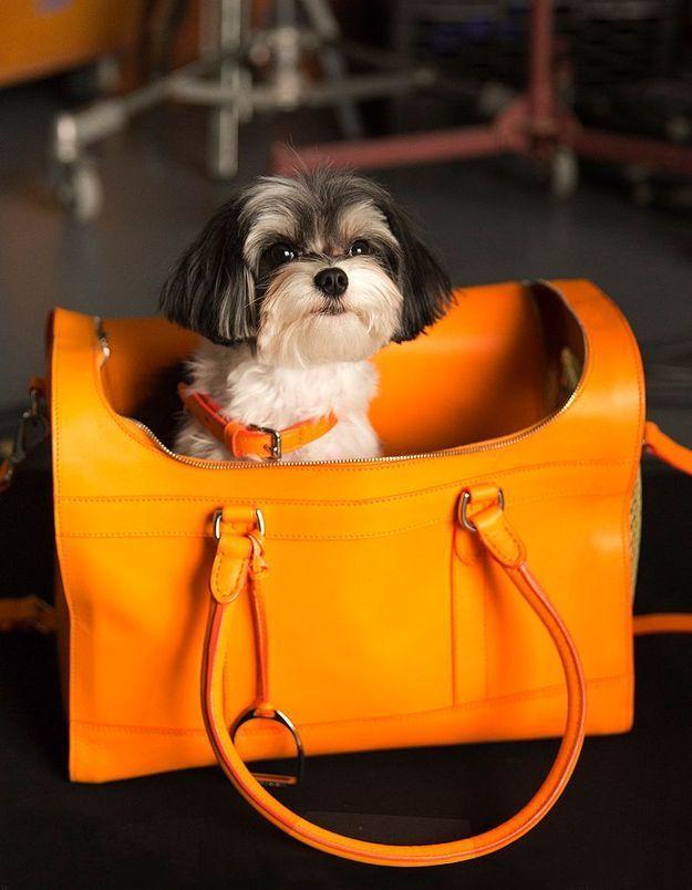 «  The Dog Walk »  : quand les chiens jouent aux mannequins pour Ralph Lauren