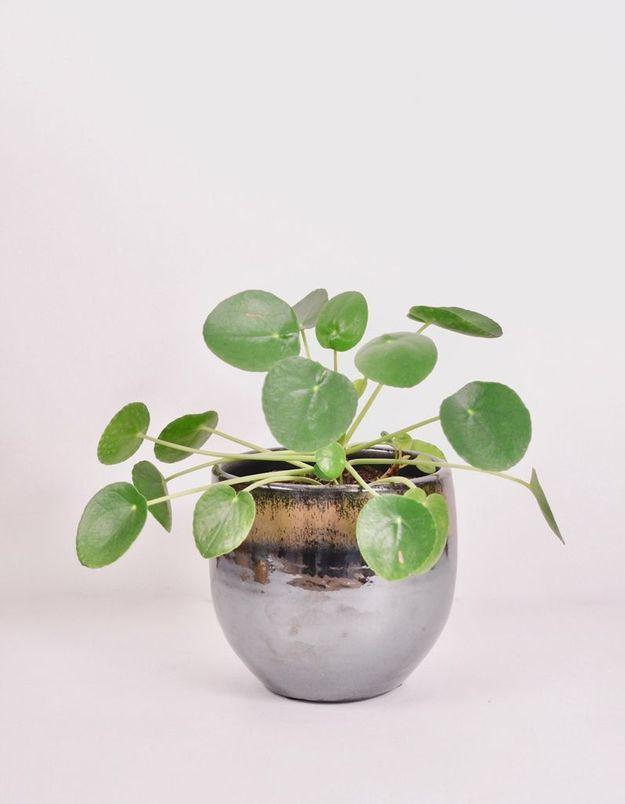 Plante et cache pot moderne Le Cactus Club
