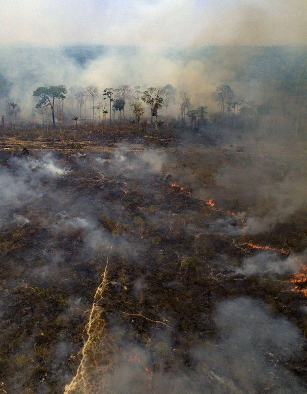 Amazonie en feu : plusieurs ONG interpellent la France sur son immobilisme