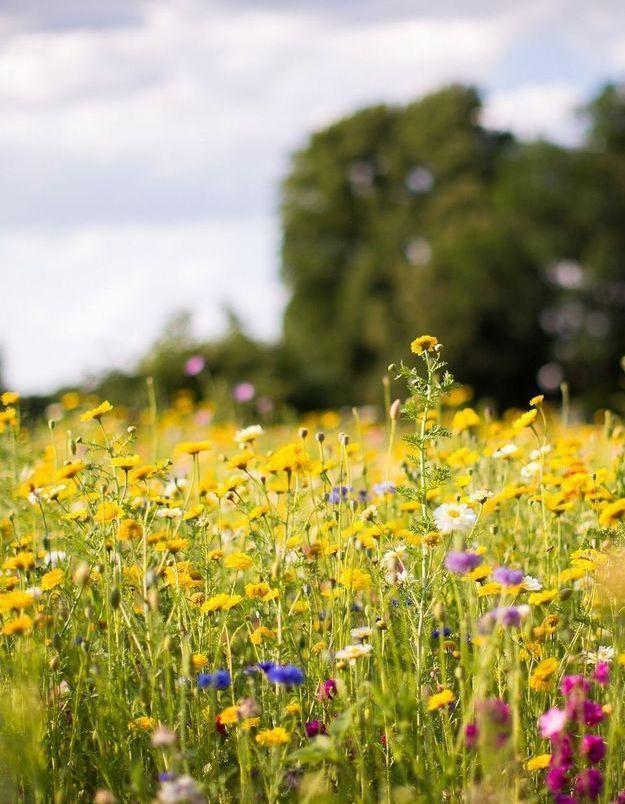 Eco anxiété, angoisse climatique... la solution pour sauver la planète ?