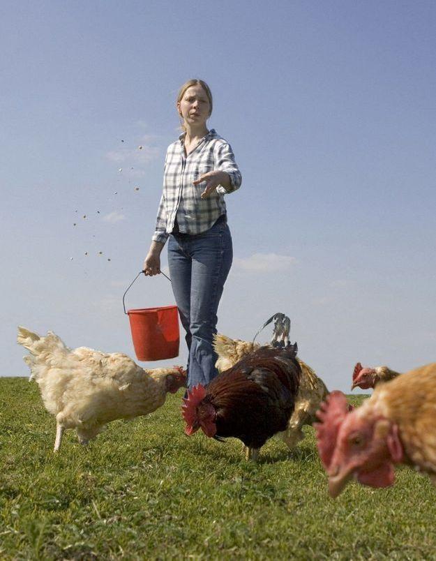 Les Français favorables à une meilleure prise en compte du bien-être animal