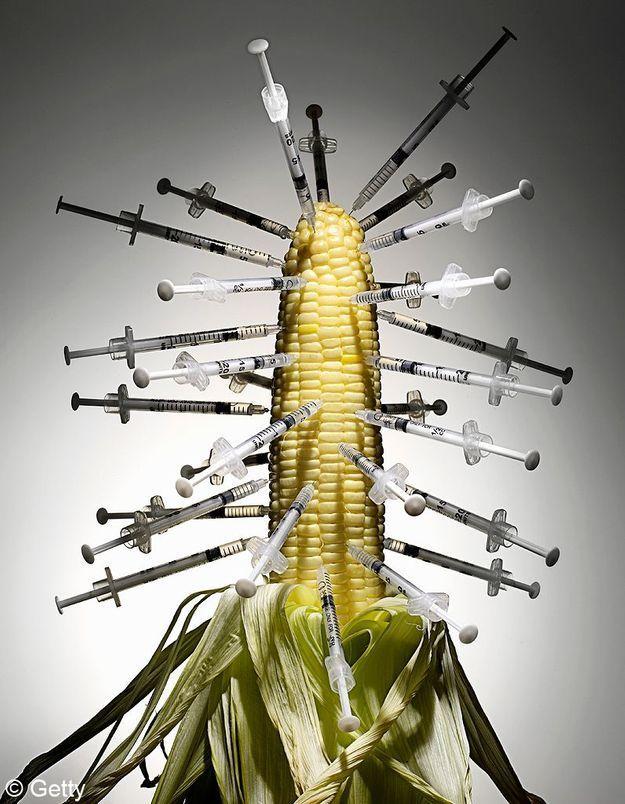 OGM : le Haut Conseil invalide l'étude choc
