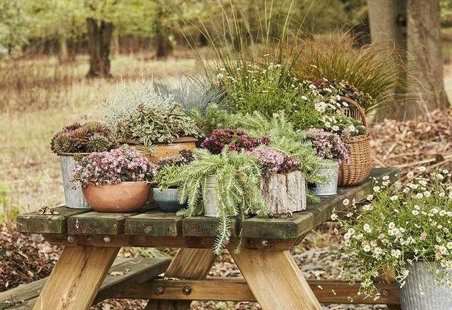 En automne, 12 gestes pour préparer son jardin pour le printemps