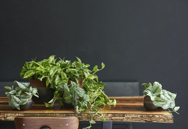 5 plantes qui n'ont pas besoin de beaucoup de lumière pour s'épanouir