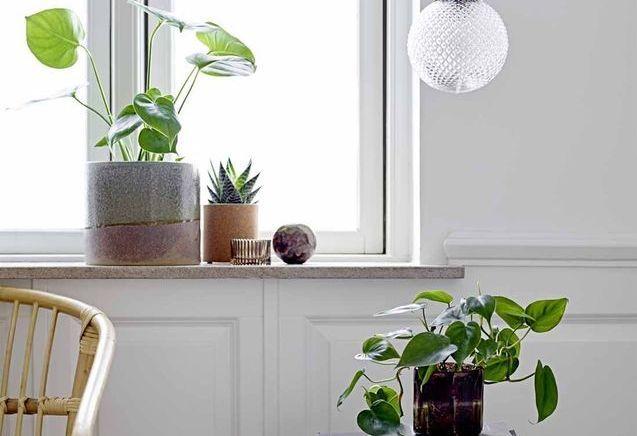 Ces plantes d'intérieur passeront l'hiver en beauté