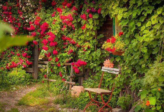 Quelles plantes choisir pour un jardin romantique ?