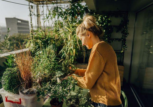 8 astuces pour avoir un balcon nourricier en permaculture