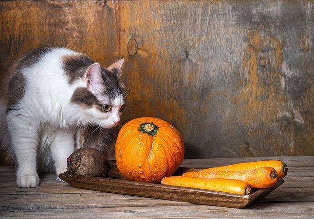 Nutrition : et si on adoptait le régime des animaux