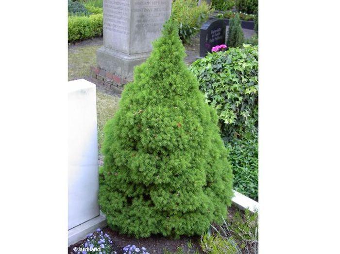 Des arbustes originaux pour mon jardin