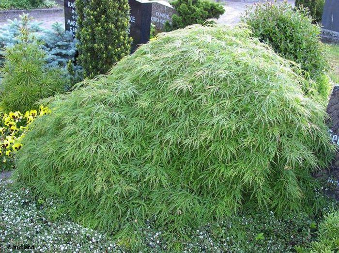 Des arbustes originaux pour mon jardin elle d coration for Arbuste de jardin