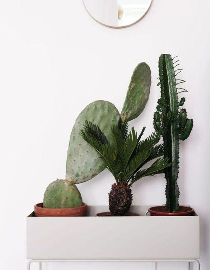 Cactus accumulés dans une jardinière