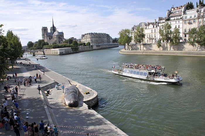 Un cachalot en plein Paris