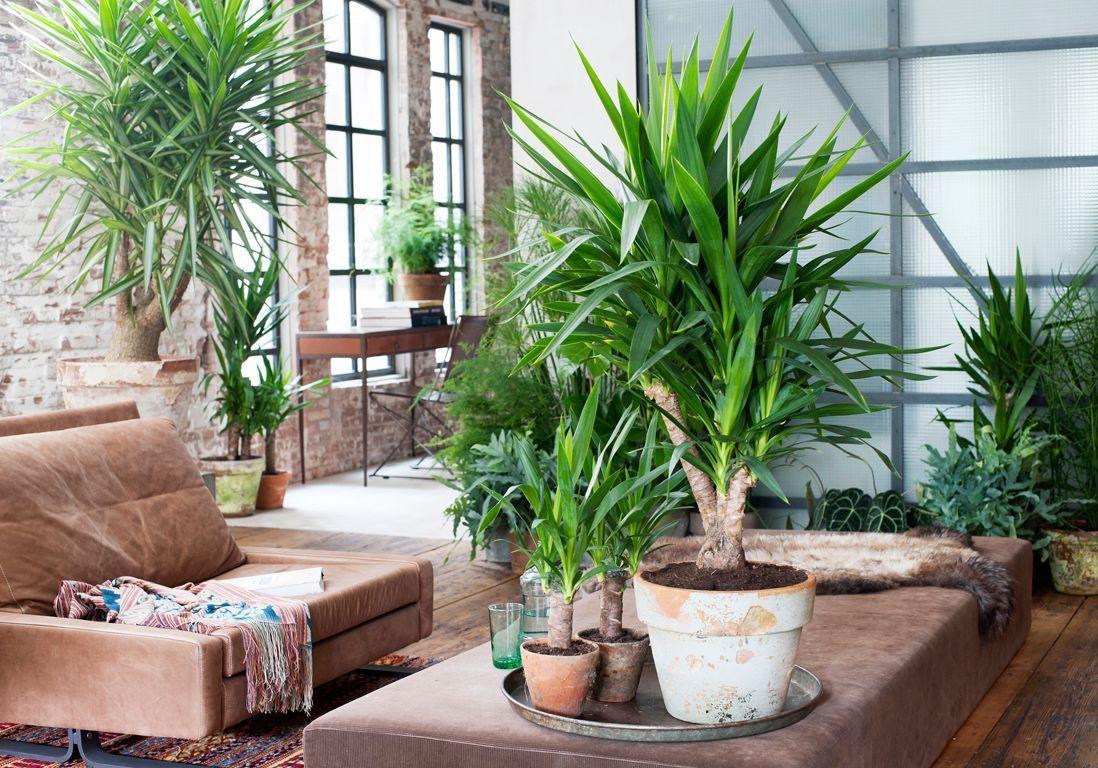Plante Robuste Pour Terrasse comment entretenir un yucca ? - elle décoration