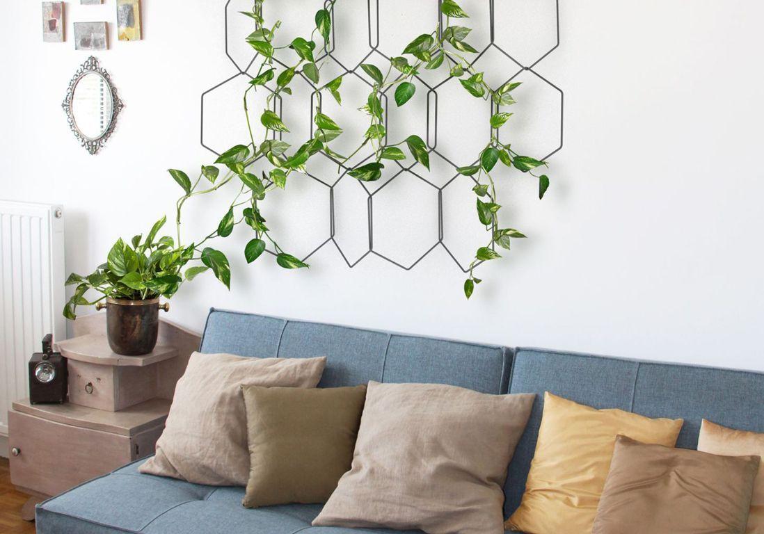 Comment Planter Une Vigne Grimpante plantes grimpantes : comment les entretenir ? - elle décoration