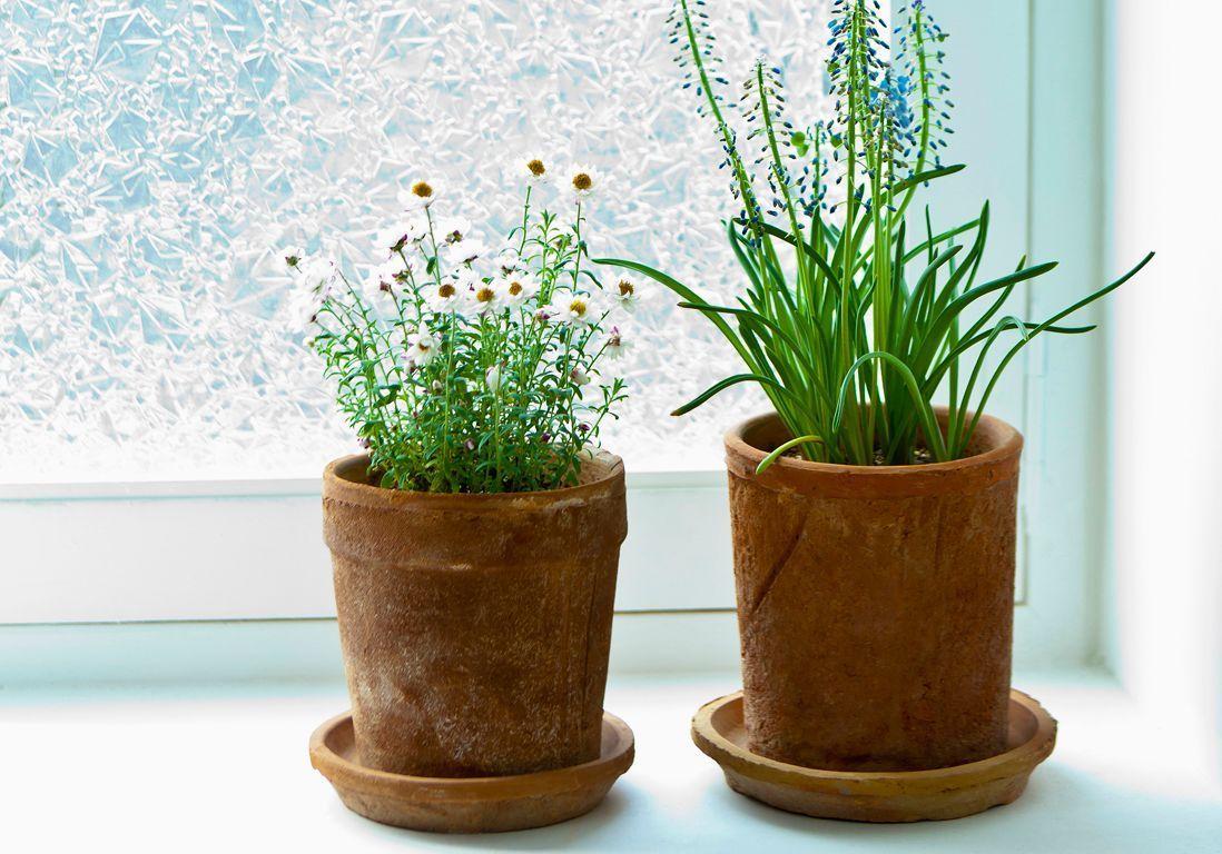 Plante D Intérieur Tendance quelle exposition pour ma plante d'intérieur ? - elle décoration