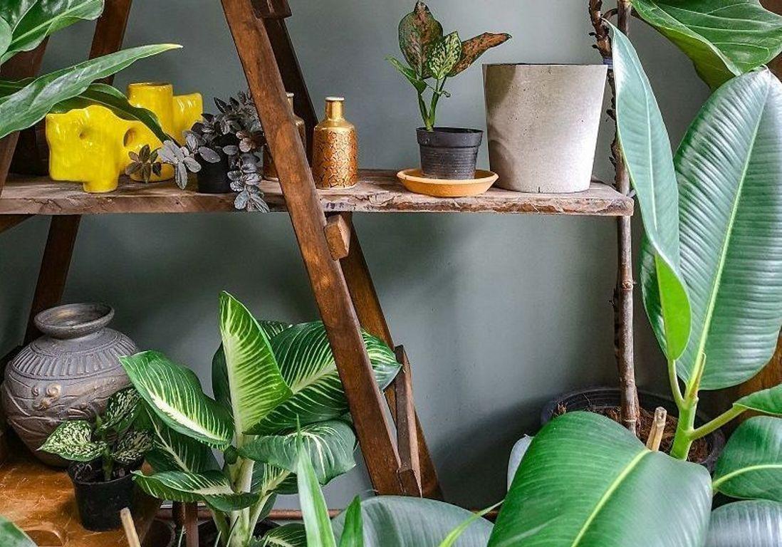 Plante D Intérieur Tendance canicule : 5 plantes d'intérieur pour garder votre maison