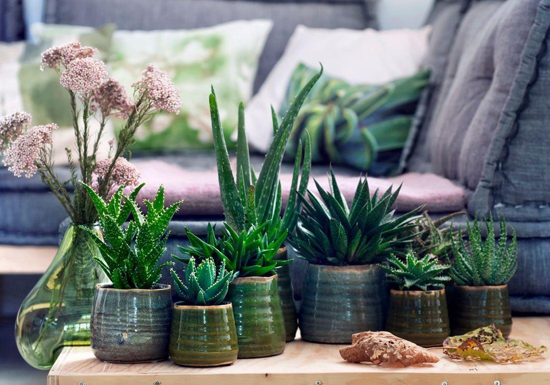 Plante Robuste Pour Terrasse 6 plantes increvables pour celles qui n'ont vraiment pas la