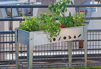 Les clés pour jardiner sur son balcon