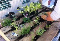 Pas-à-pas : comment créer un mur végétal ?