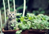 Ces plantes sont idéales (ou dangereuses) quand on possède un chat